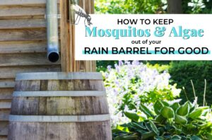 Getting and Keeping Mosquitos and Algae out of your rain barrel