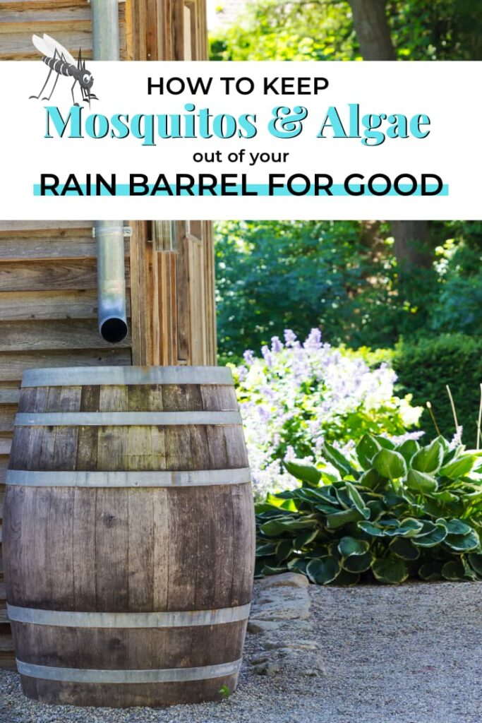 Keep mosquitos and algae out of your rain barrel