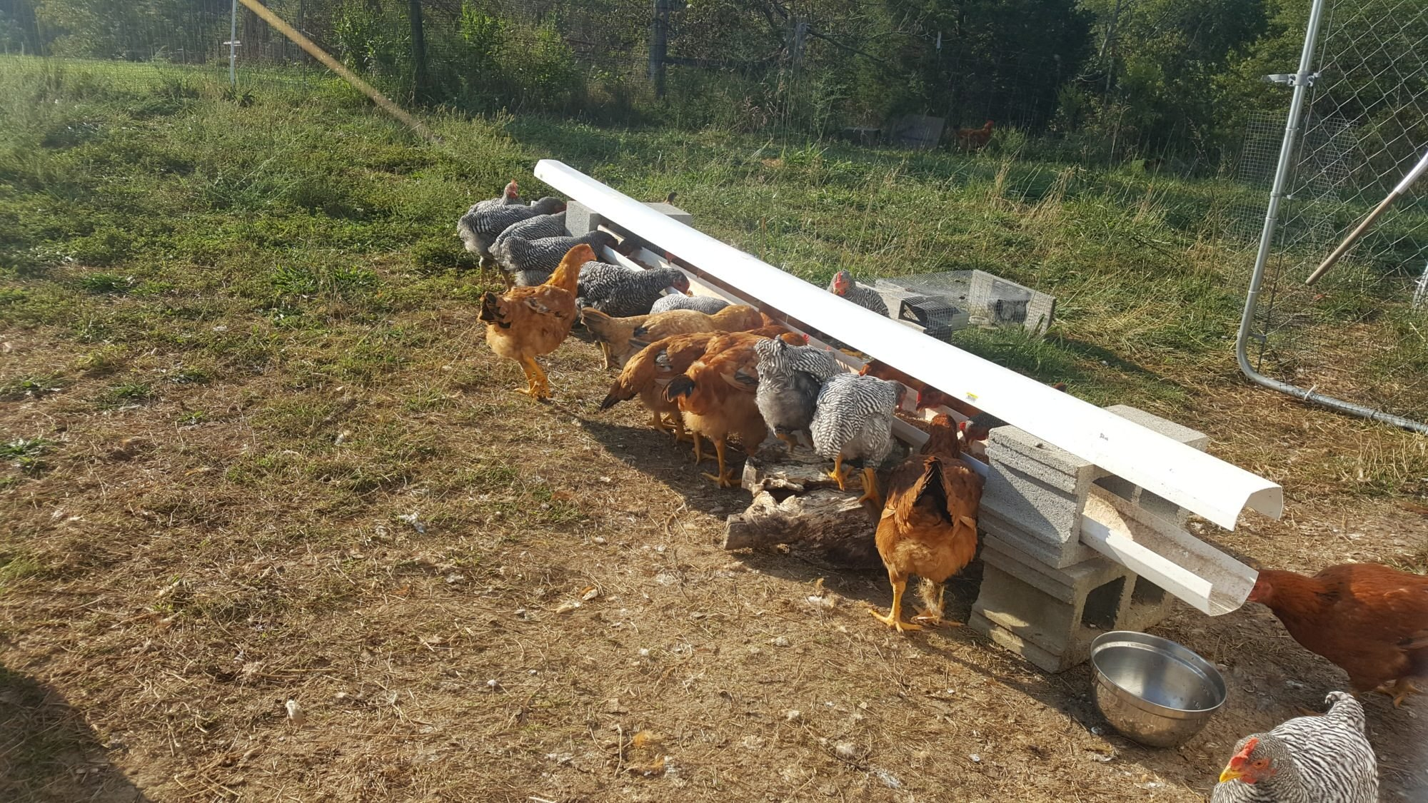 Feeding Trough for animals